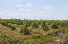 Liệu có được chuyển nhượng, tặng cho đất nông nghiệp?