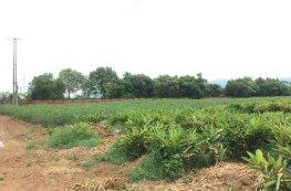 Có phải gia hạn quyền sử dụng đất nông nghiệp?