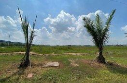 Bình Dương: Thu hồi 346ha đất trồng cao su để làm KCN Nam Tân Uyên GĐ2
