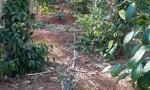 Chính chủ cho thuê 10000m2 đất vườn, xã Sơn Bình, Châu Đức, Bà Rịa - Vũng Tàu